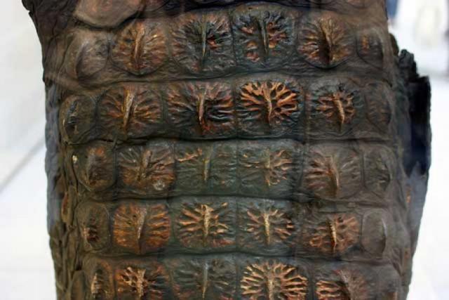 Доспех из крокодиловой кожи /музей, Лондон/